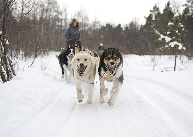 Cross-country skiing and husky sledding in Norway